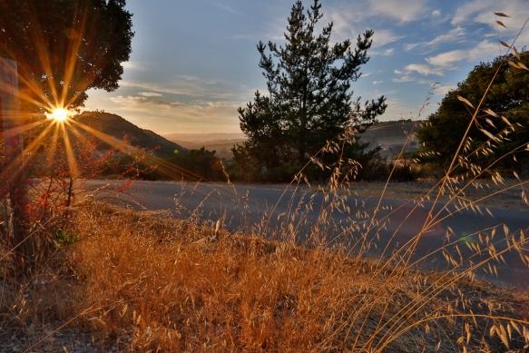 Carmel Valley-2
