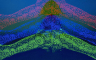 pachangamusicvideo12